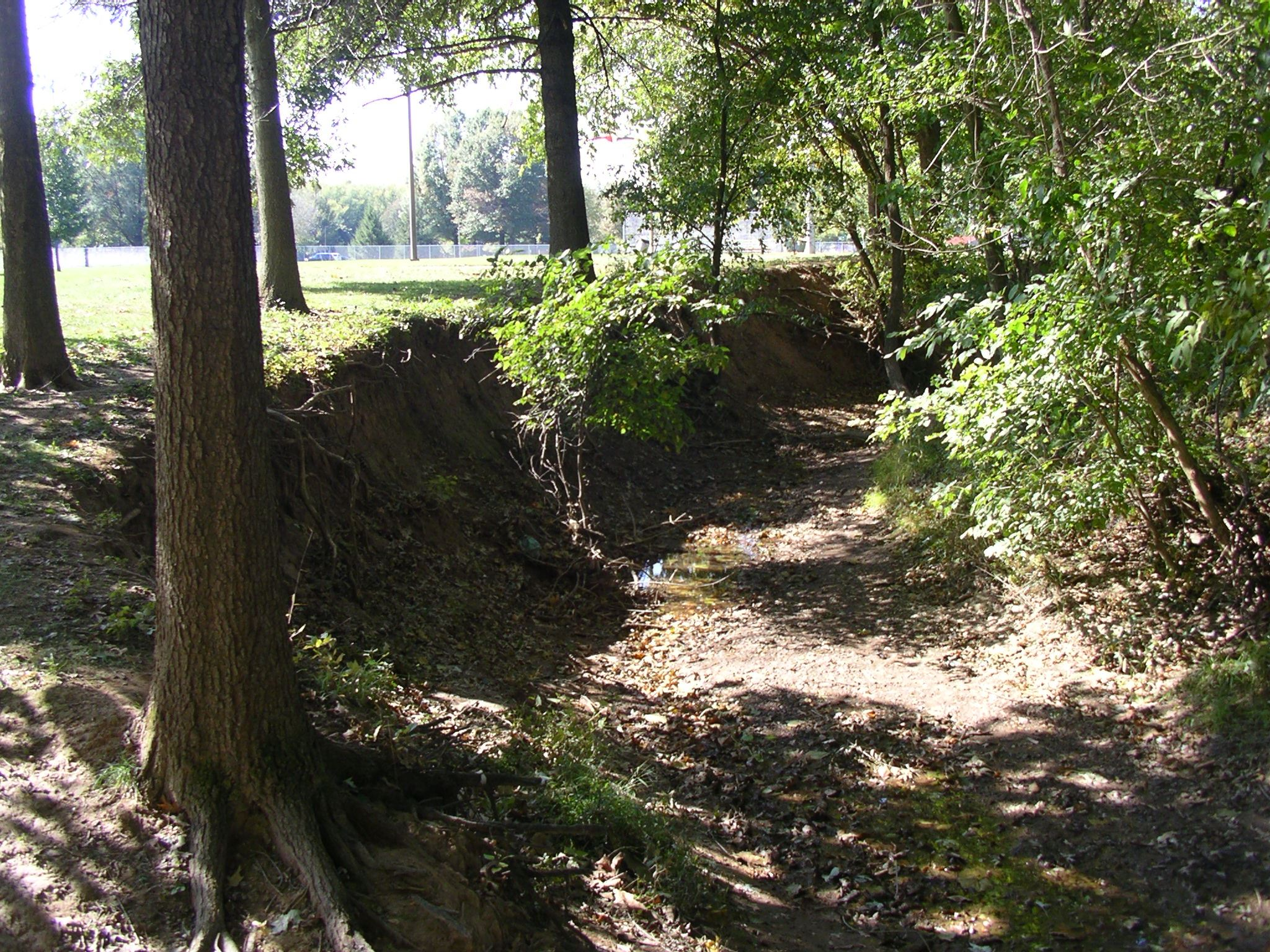 Pinecliff Stream - 2009 (Before)